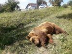 Pri kontajneri našli uhynutú medvedicu, na miesto privolali ochranárov