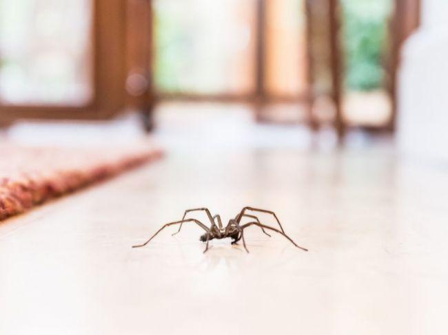 7 rastlín, ktoré vám z domácnosti vyženú pavúky