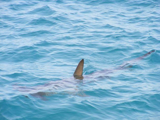 Kolumbijské úrady zhabali zásielku obsahujúcu takmer 3500 žraločích plutiev