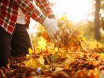 Od kompostu po izoláciu: 6 spôsobov, akými môžete využiť opadané lístie